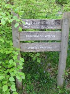 Baneriggs Wood Grasmere