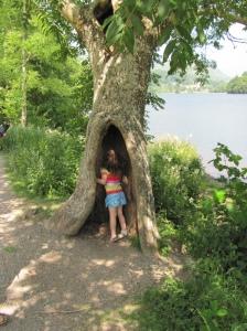 Grasmere Tree