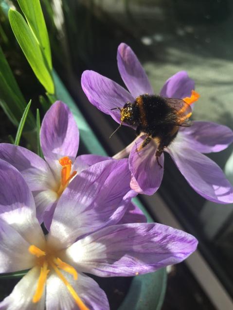 Spring in Grasmere