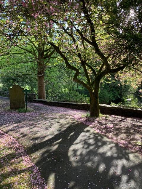 Falling Blossom Grasmere